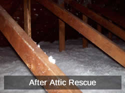 After Attic Rescue