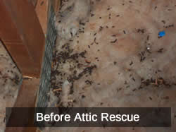 Before Attic Rescue
